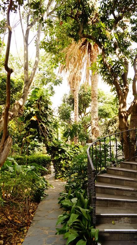 Agaete garden