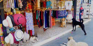 tureckie psy