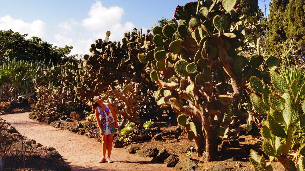 Jardín-Botánico-Canario-Viera-y-Clavijo