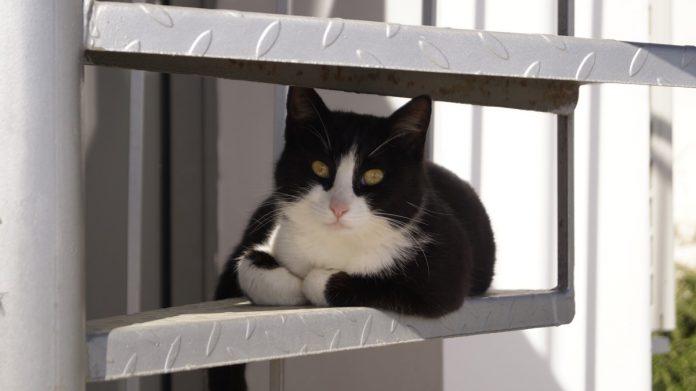 czy dokarmiać bezdomne koty