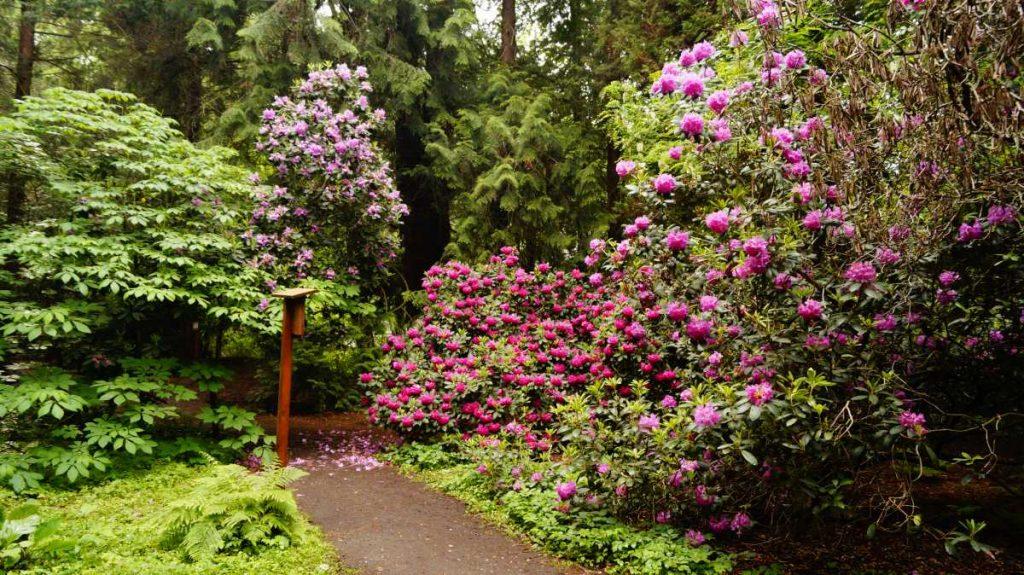 lipno ogrod dendrologiczny