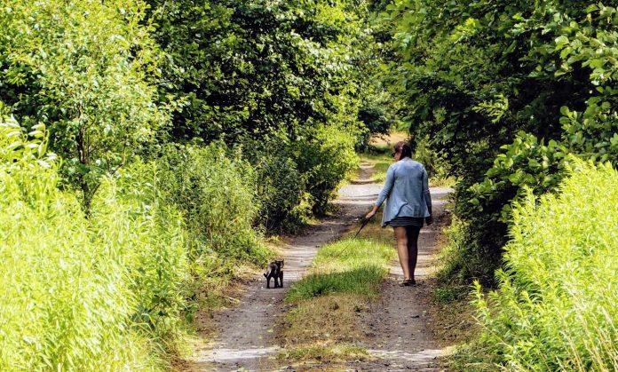 kot na smyczy / spacer z kotem