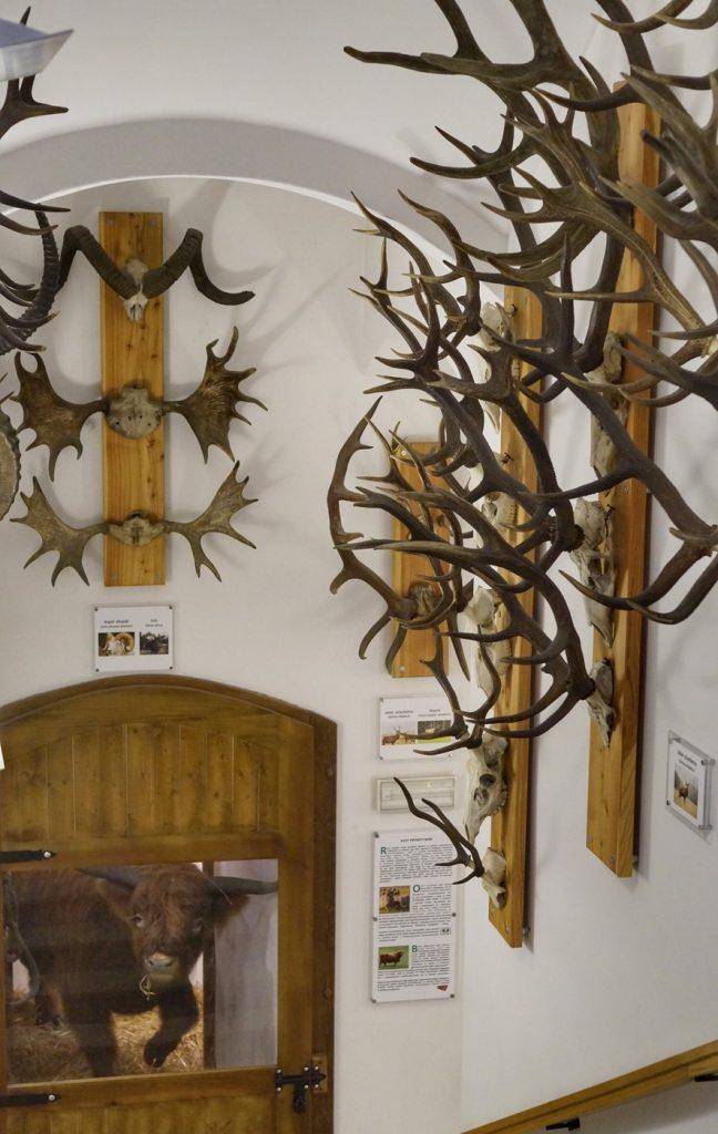 Muzeum Przyrodnicze Jelenia Góra