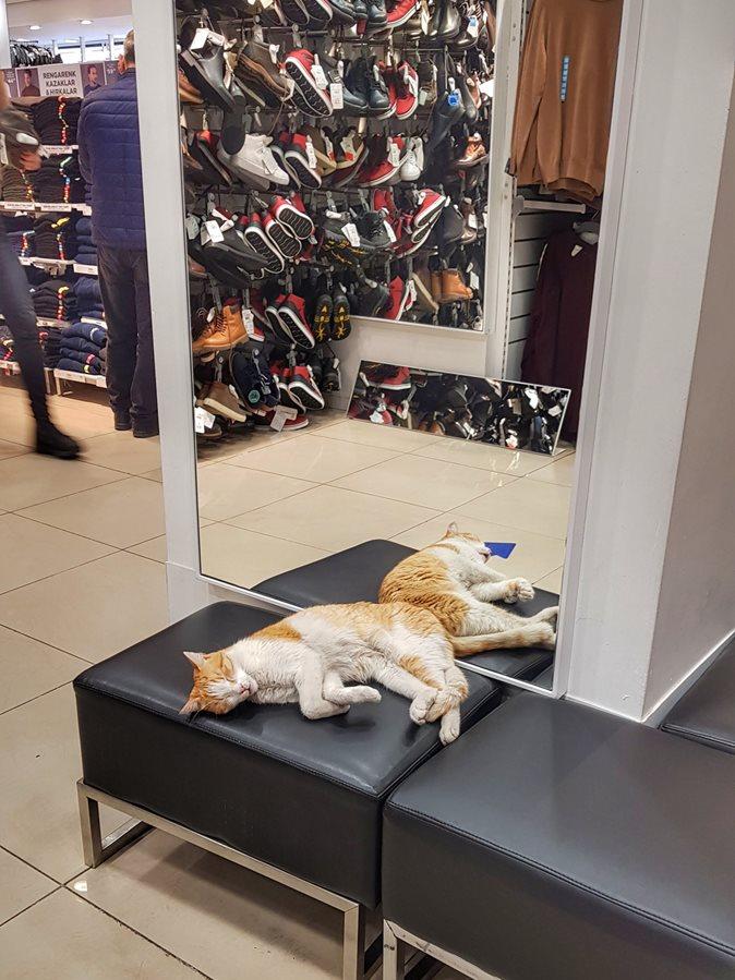 w tureckim sklepie