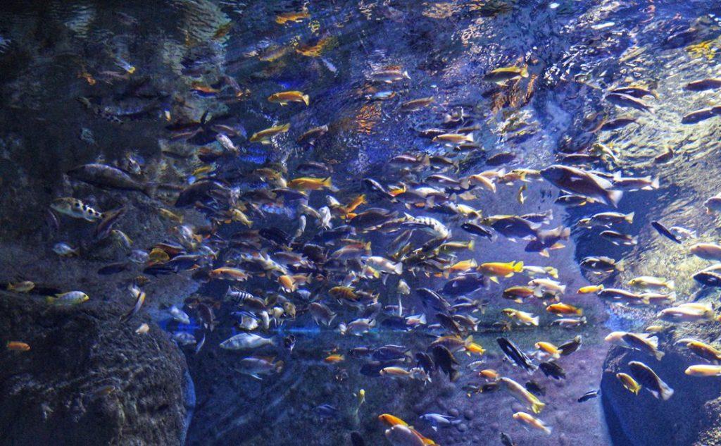 akwarium zoo worcław