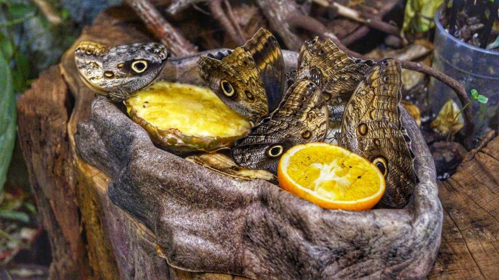motyle zoo wrocław