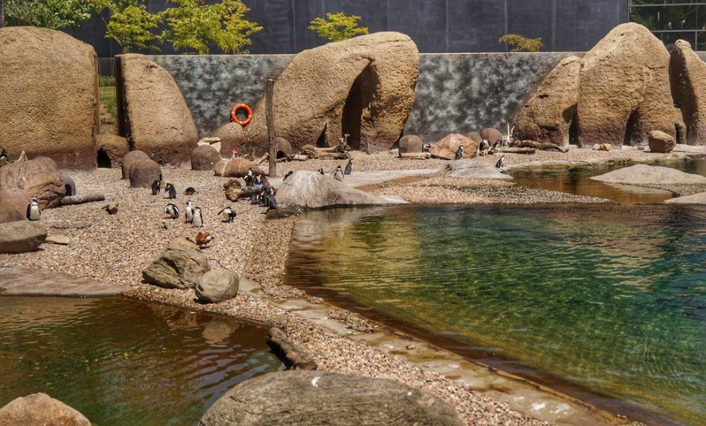 pingwiny zoo wrocław