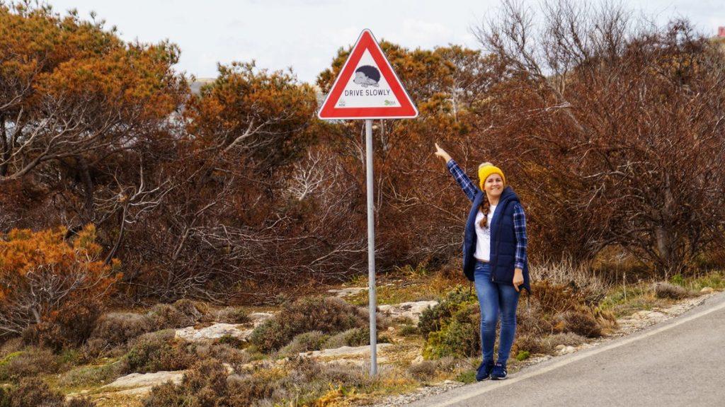 znak drogowy uwaga jeże