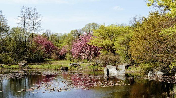 Łódź ogród botaniczny