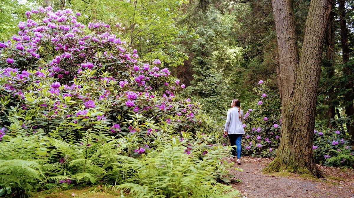 Lipno arboretum