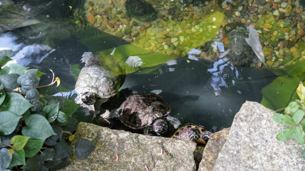 Palmiarnia w Łodzi żółwie