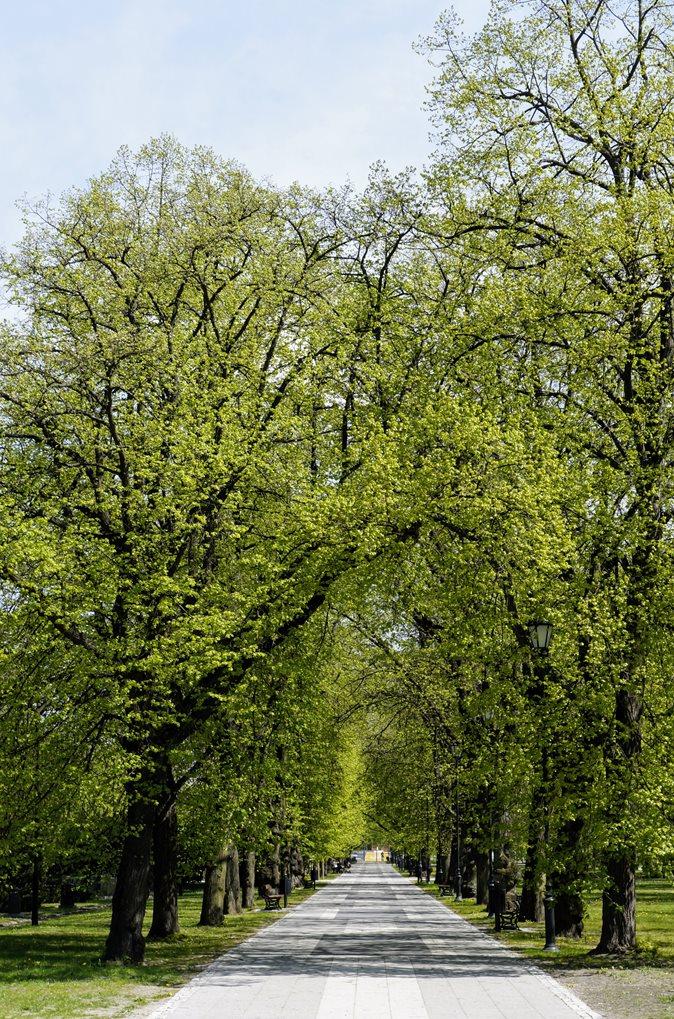 Park Księcia Poniatowskiego Łódź