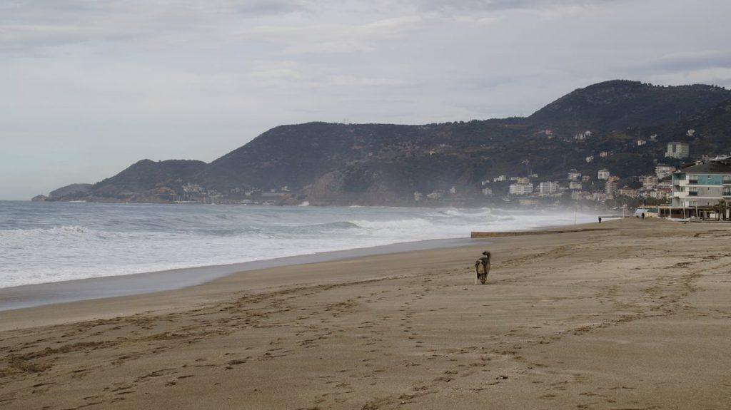 Pogoda w Lloret de Mar w styczniu