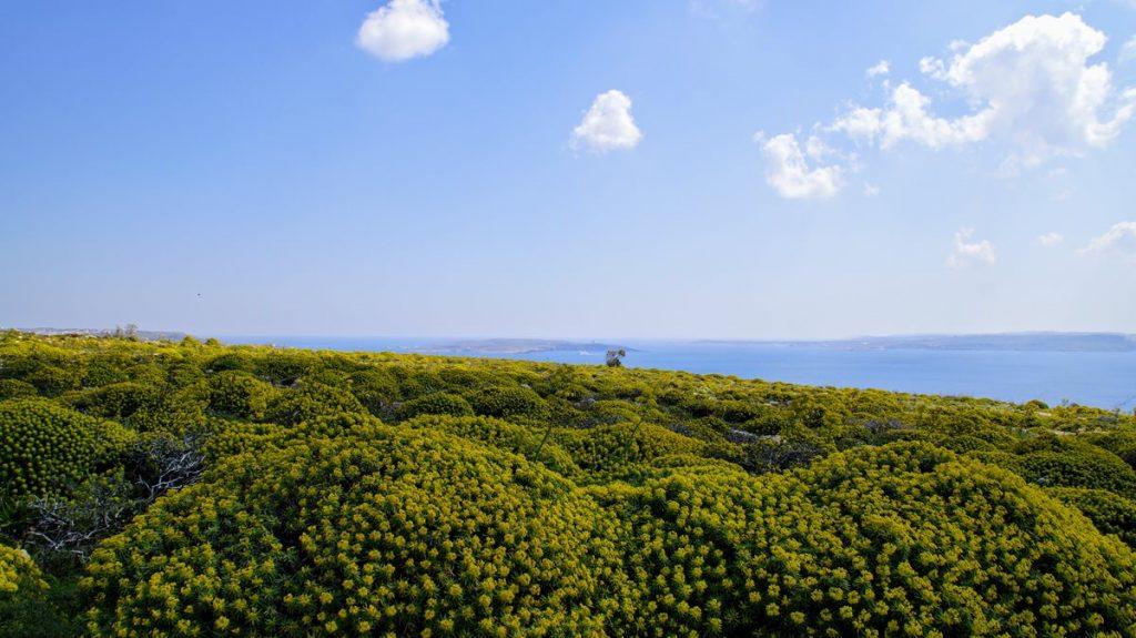 krajobraz Gozo