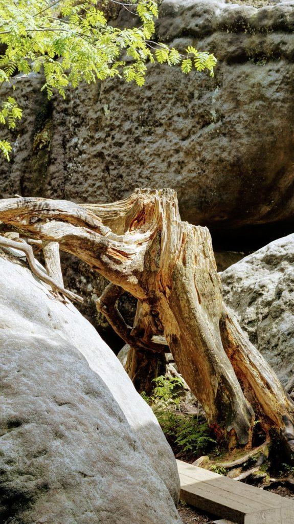 błędne skały- na szlaku