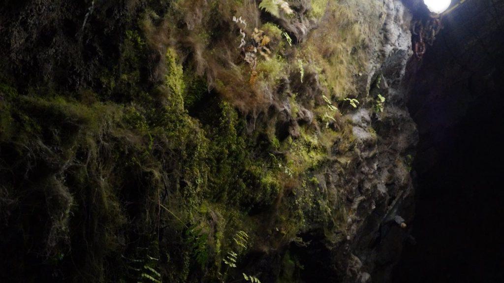sztolnia królowa luiza- roślinność pod ziemią