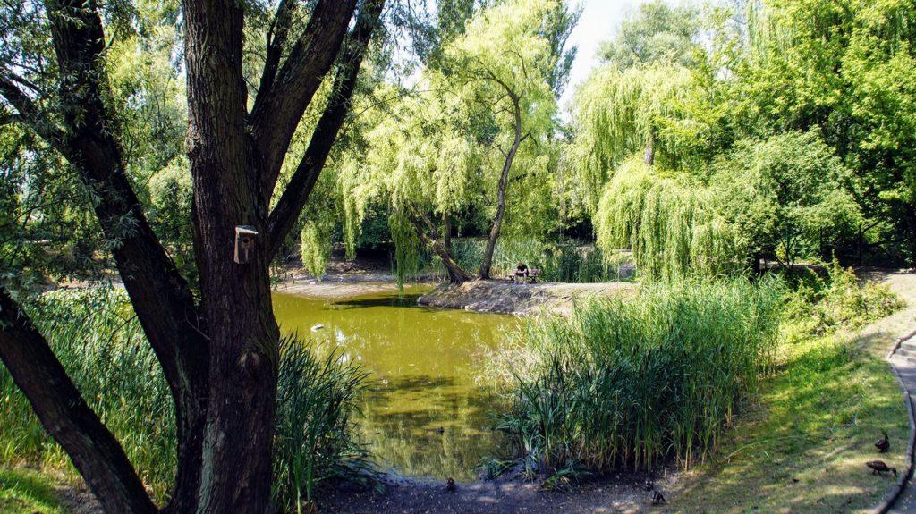 zabrze ogród botaniczny śląsk