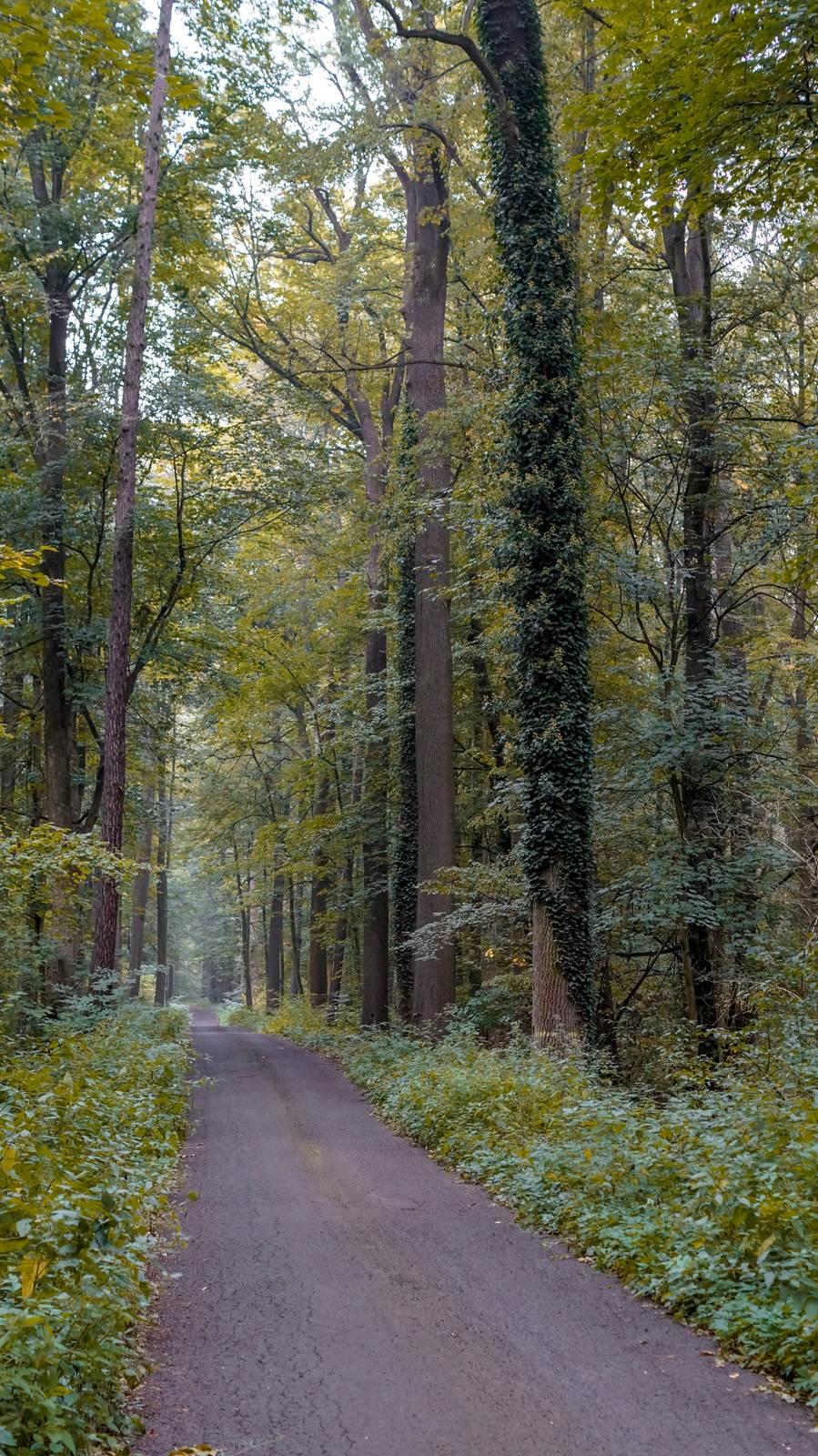 Rezerwat przyrody Kokorycz