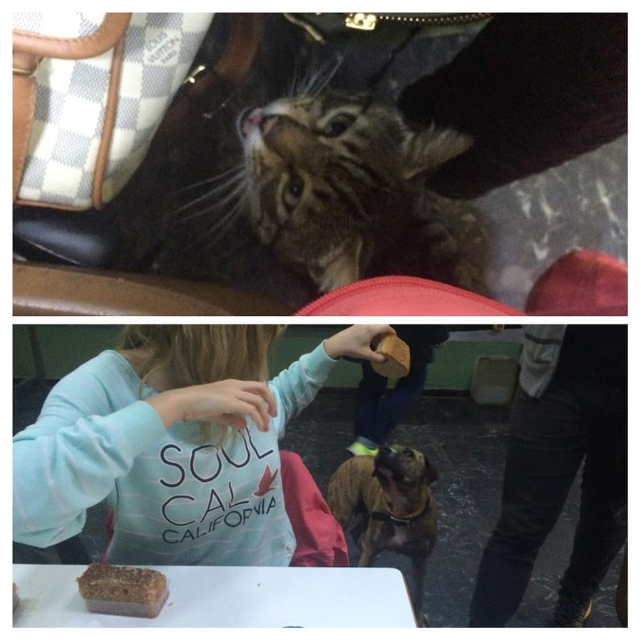 Kot i pies na greckiej stołówce w Patras.