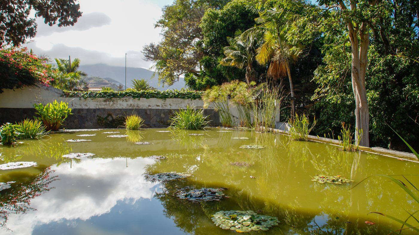 Ogród Botaniczny w Puerto de La Cruz
