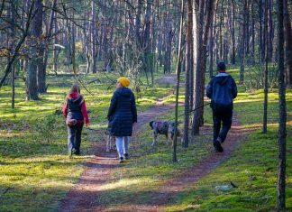 spacer w lesie z psem