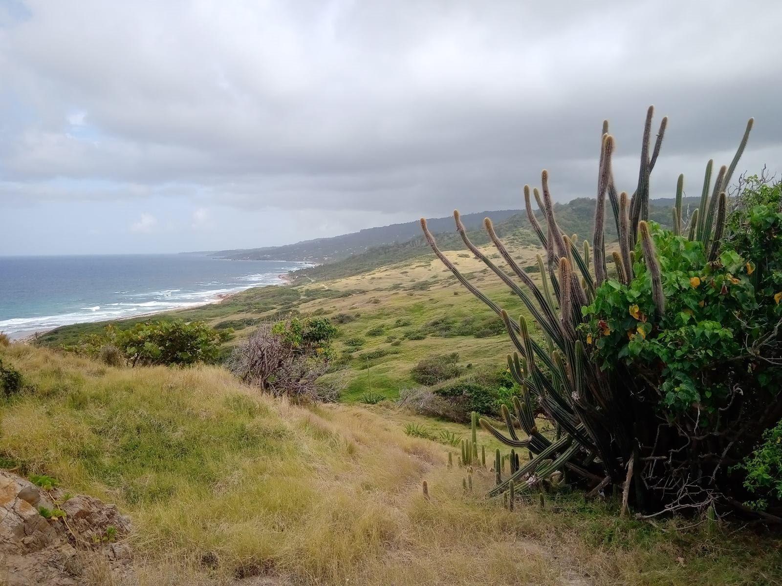 Wschodnia część wyspy